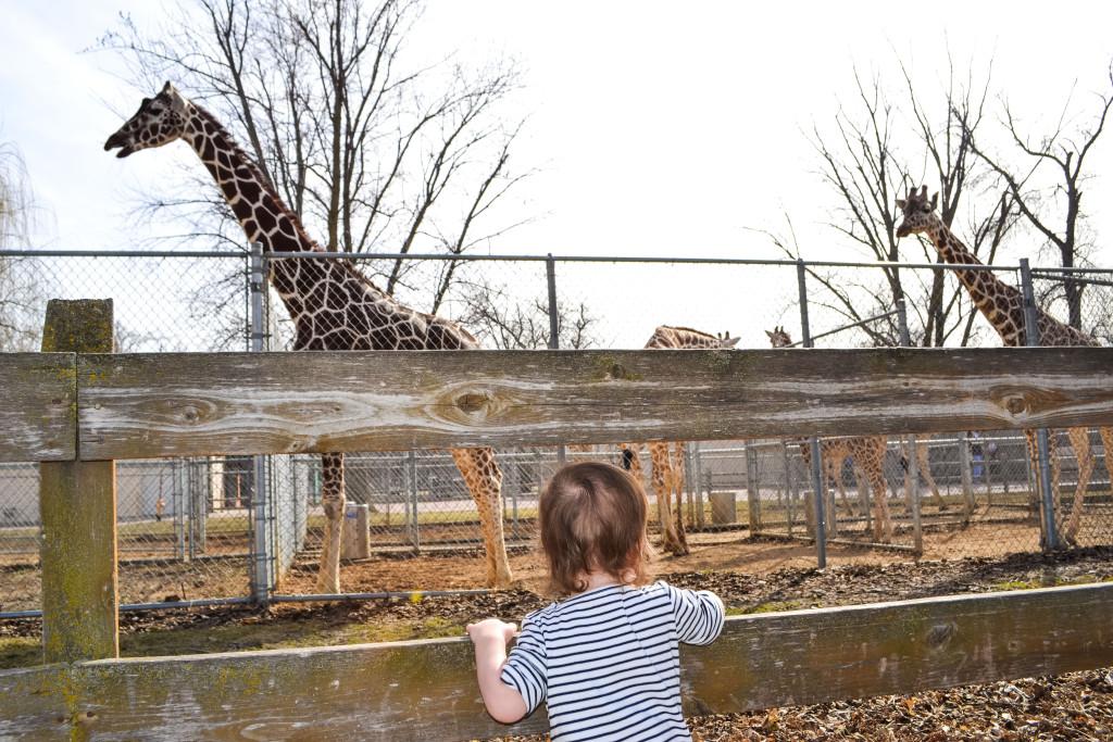 St Pattys Zoo Fun-29