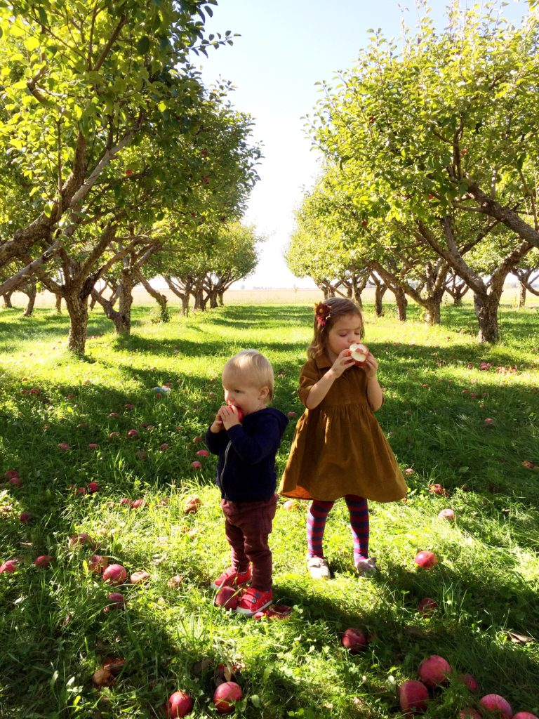 family apple orchard